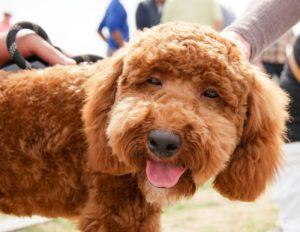愛犬元気のモデル
